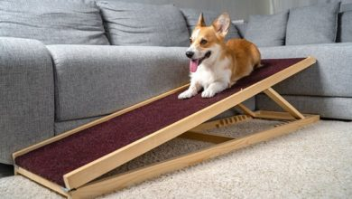 Photo of How to select the best ramp for disabled PMR?